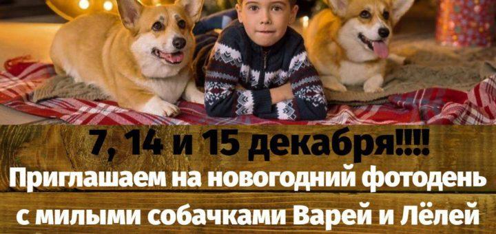 14 и 15 декабря 2019 г фотосессия с собачками Варей и Леёлей | в студии Город друзей